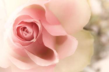 Melody la Rosa
