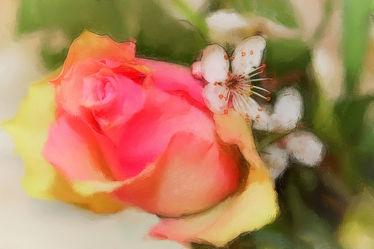 Rose und Zierkirsche