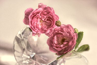 Bild mit Blumen, Rosen, Blume, Rose, Flower, Blüten, VINTAGE, Makroaufnahmen, blüte