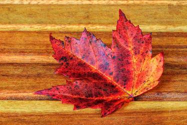 farbige Schönheit im Herbst