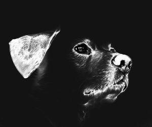 Bild mit Tiere, Haustiere, Hunde, Tier, Hund, Dog, Hundebild, Tiere & Lebewesen, labrador