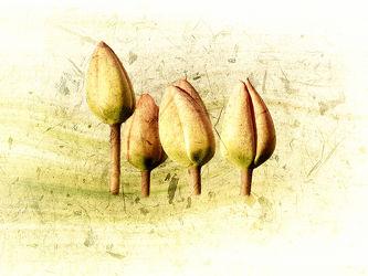 Tulpen - Quartett