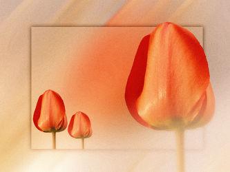 Tulpengrüsse