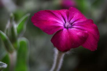 Blümchen lila