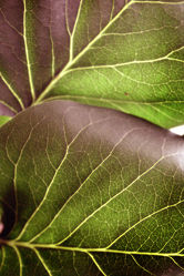 Makro Blätter