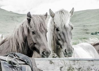 Bild mit Tiere, Pferde, Tier, Kinderbild, Kinderbilder, Pferd, reiten, pony, Ponys, Pferdeliebe, pferdebilder, pferdebild