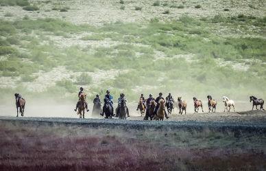 Bild mit Tiere, Pferde, Tier, Kinderbild, Kinderbilder, Pferd, Herde, reiten, Pferdeliebe, pferdebilder, pferdebild