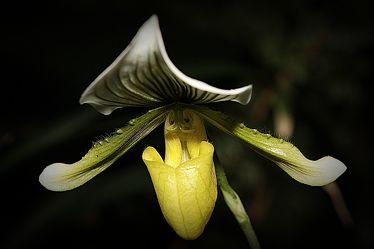 Bild mit Orchideen,Orchidee,Orchid