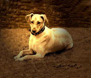 Bild mit Hunde, Hund, Dog, Hundebild, Meine Hunde