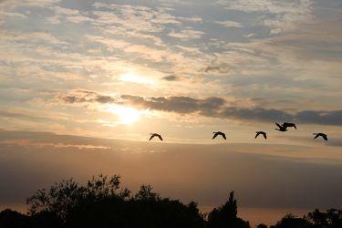 Bild mit Sonnenuntergang, Sonnenaufgang, Gänse, Stöckter Deich