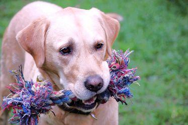 Bild mit Tiere, Haustiere, Hunde, Tier, Hund, Dog, Hundebild, Meine Hunde