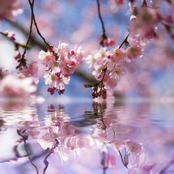 Bild mit Blumen, Frühling, Blume, Blüten, Wellness & Stillleben & Objekte, Spa, blüte, frühjahr, zen