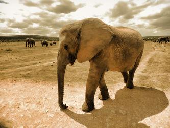 Bild mit Tiere, Elefant, Elephant, Elefanten, Wildtiere, Wildlife