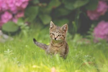 Kleiner Tiger im Gras