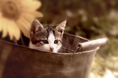 Kätzchen in der Wanne
