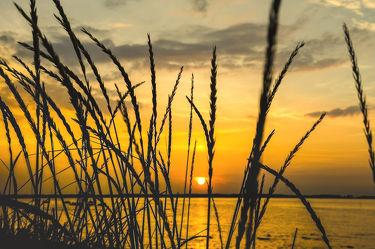 Strandhafer im Sonnenuntergang
