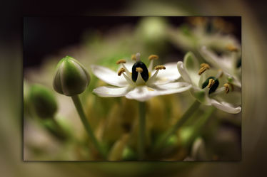 Little Blossoms