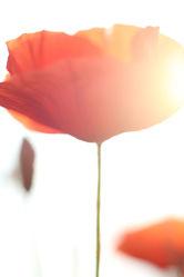 Bild mit Flowers