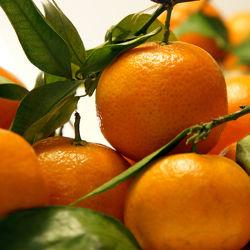 Bild mit Früchte, Lebensmittel, Küchenbild, Food, KITCHEN, Küche