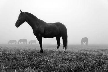 Pferdeweide im Morgennebel