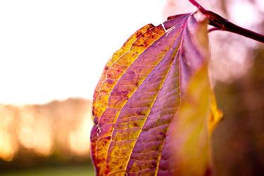 Bild mit Natur, Landschaften, Bäume, Wälder, Herbst, Sonne, Wald, Baum, Blätter, Landschaft, Blatt, Landschaft und Natur