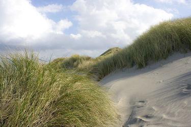 Bild mit Gewässer, Wellen, Ostsee, Meer, Dünen, Dünengras, Nordsee, Küste, Fotografien, ozean, Welle