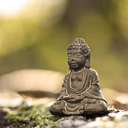 Bild mit Natur, Wald, Meditation, Ruhe, Entspannung, Buddha, Wellness, Spa, Erholung, Yoga, zen