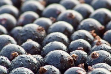 Bild mit Früchte, Lebensmittel, Beeren, Obst, Küchenbild, KITCHEN, Küche, Johannisbeeren