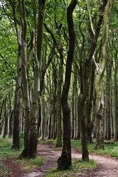 Gespensterwald in Nienhagen 2