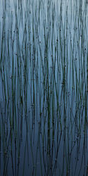 Gräser im See 2