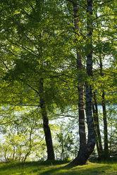 Bild mit Natur, Bäume, Wälder, Urlaub, Wege, Wald, Baum, Weg, Waldweg, Steg, Ferien, Nature, Entspannung, Skandinavien, Erholung, Stege, Freiheit, Outdoor, abenteuer, waldwege