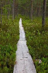 Bild mit Natur, Nadelbäume, Wälder, Wege, Sonne, Wald, Weg, Nadelbaum, Ruhe, Skandinavien, Erholung, Umwelt, Moos, Naturschutz, Wildnis, pfad