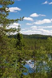 Bild mit Natur, Nadelbäume, Wälder, Sonne, Wald, Nadelbaum, See, Ruhe, Skandinavien, Erholung, Umwelt, Moos, Naturschutz, Wildnis