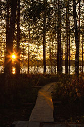 Bild mit Natur, Bäume, Wälder, Sonnenuntergang, Urlaub, Sonnenaufgang, Wege, Wald, Baum, Weg, Waldweg, Steg, Ferien, Nature, Entspannung, Skandinavien, Erholung, Stege, Freiheit, Outdoor, abenteuer, waldwege