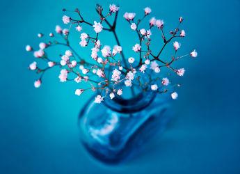 Bild mit Blumen und Blüten