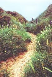 way through the dunes 2