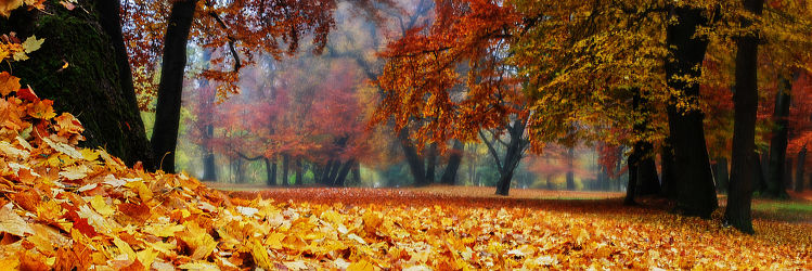 autumn in the woodland