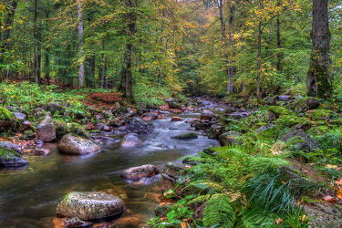 Elendstal im Harz