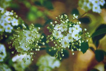 Bild mit Pflanzen, Blumen, Blume, Pflanze, Wiese, Retro, VINTAGE, Wiesen, Schleierkraut
