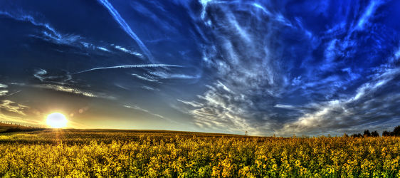 Bild mit Natur, Landschaften, Blumen, Raps, Panorama, Landschaft, Blume, Feld, Felder, Mansfeld Südharz, landwirtschaft, Rapsfeld