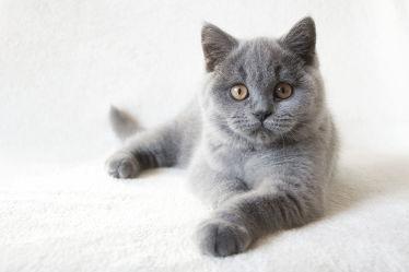 Bild mit Tiere, Haustiere, Katzen, Tier, Katze, Kater, pfoten, Haustier, pfote, pfötchen, hauskatzen, hauskatze