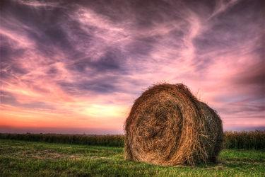 Bild mit Landschaften, Sonnenuntergang, Sonnenuntergang, Landschaft, Wiese, Ernte, Mansfeld Südharz, Wiesen, Weide, Weiden, landwirtschaft, Erntezeit