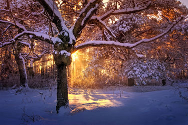 Bild mit Winter, Schnee, Eis, Wälder, Sonnenuntergang, Sonnenaufgang, Wald, Märchenwald, frühjahr, Kälte, Frost, Sonnenstrahlen