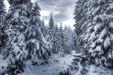 Frozen Harz