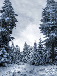 Bild mit Natur, Landschaften, Berge, Winter, Schnee, Eis, Tannen, Landschaft, Weihnachten, winterlandschaft, Harz, berg, Kälte, Gebirge, Wind, gefroren, Gipfel, Kalt, Polar