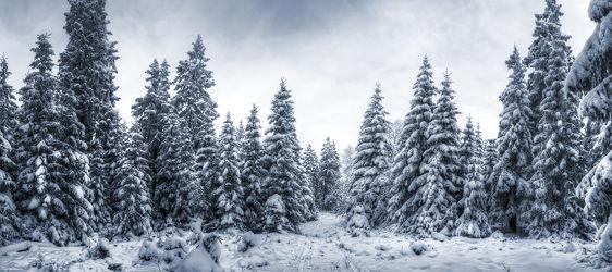 Bild mit Natur, Landschaften, Berge, Winter, Schnee, Eis, Tannen, Panorama, Landschaft, Weihnachten, winterlandschaft, Harz, berg, Kälte, Gebirge, Wind, gefroren, Gipfel, Kalt, Polar