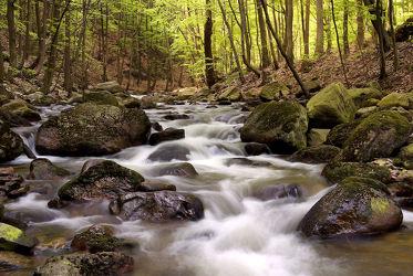 Bild mit Natur, Wasser, Gewässer, Flüsse, Frühling, Stein, Wasserfälle, Wald, Steine, Wasserfall, Harz, Fluss, Gestein, Ilsetal