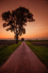 Bilder mit Baum