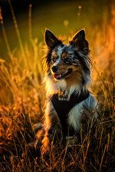 Bilder mit Hunde