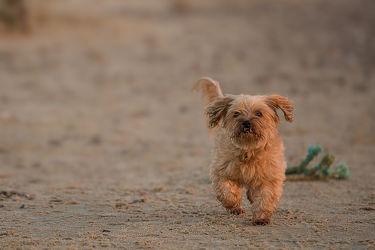 Bild mit Tiere, Haustiere, Hunde, Strand, Tier, Hund, Tierwelt, Hundebabys, Haustier